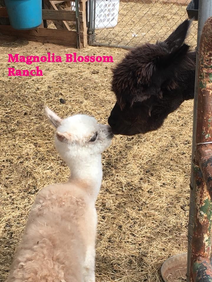 MagnoliaBlossomRanch.jpg