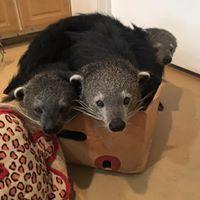 Bints-in-a-box
